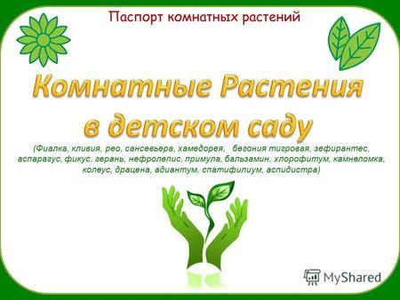 знакомство с комнатными растениями группы младшая группа
