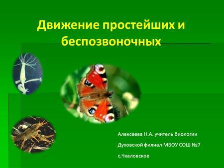 Презентация На Тему Движение Животных По Биологии