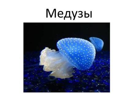 Презентации по биологии на тему медузы