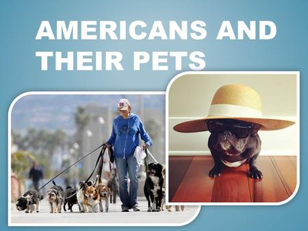 AMERICANS AND THEIR PETS. Last year, Americans spent on their pets more than $ 50 billion. Thus, 58-year-old resident of New York State Margie Berman.
