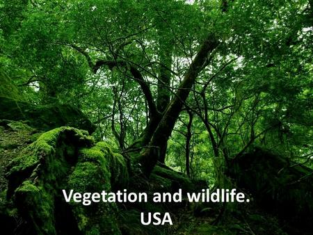Vegetation and wildlife. USA. Flora of the United States The native flora of the United States includes about 17,000 species of vascular plants, plus.