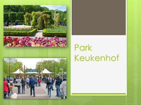 Park Keukenhof. Keukenhof - the Royal flower Park in the Netherlands. Also known as the Garden of Europe. Located almost on the coast between Amsterdam.