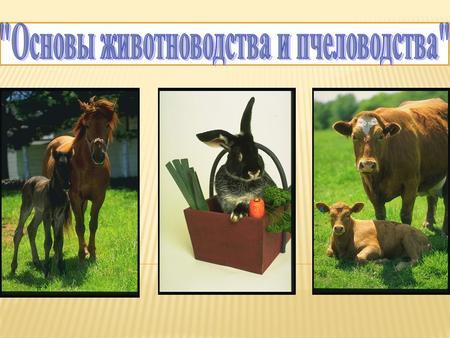 Сельскохозяйственные тему животные презентацию на