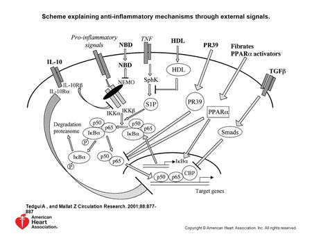 Scheme explaining anti-inflammatory mechanisms through external signals. Tedgui A, and Mallat Z Circulation Research. 2001;88:877- 887 Copyright © American.