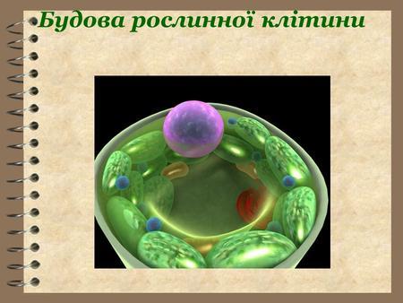 Презентацию на тему клітина