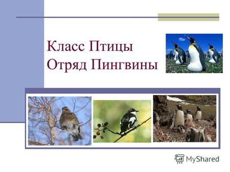 Презентация на тему Презентация к уроку биологии класс на  Класс Птицы Отряд Пингвины Археоптерикс Реконструкция и отпечаток на сланце
