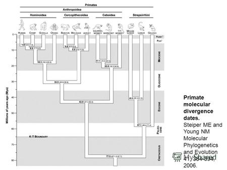 Primate molecular divergence dates. Steiper ME and Young NM Molecular Phylogenetics and Evolution 41, 384-394, 2006.