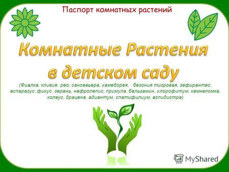 Знакомство С Комнатными Растениями Герань