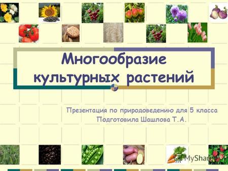 Презентация на тему Многообразие культурных растений Учитель  Многообразие культурных растений Презентация по природоведению для 5 класса Подготовила Шашлова Т А