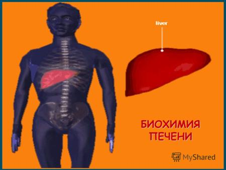 БИОХИМИЯ ПЕЧЕНИ. portal vein hepatic artery bile duct sinusoids bile canaliculi central vein СТРОЕНИЕ ПЕЧЕНИ.
