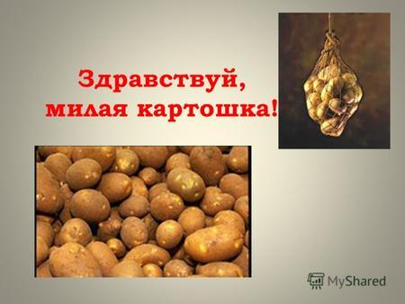 Скачать презентации по теме картофель