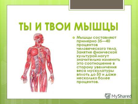Доклад на тему мышцы по биологии 4868