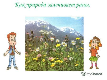 Картинки маленькие раны природы