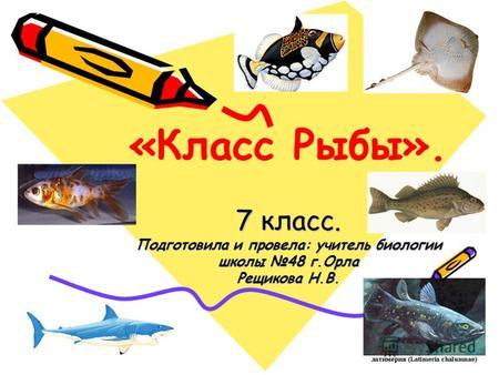 Скачать презентации на тему рыбы 7 класс