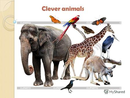 Clever animalsLizardSnakeElephantWhale-[(h)we ɪ l]