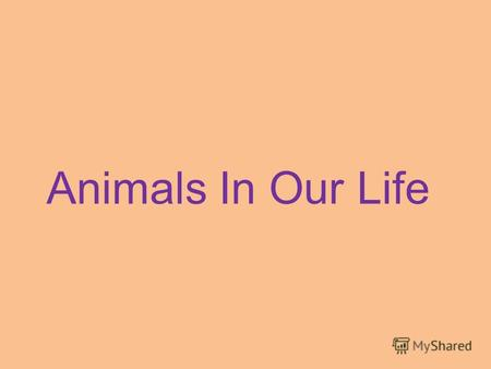 Animals In Our Life. [s], [d], [t], [f], [v], [e], [ei], [a:], [ai].