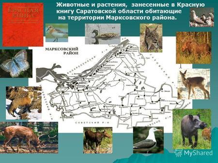 познакомиться бесплатно в саратовской области