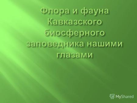 Скачать презентация по теме кавказский биосферный заповедник