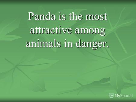 Panda is the most attractive among animals in danger.