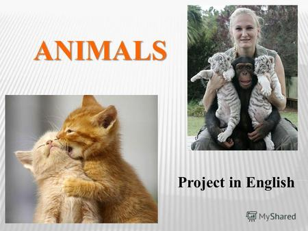 ANIMALS Project in English. Sosnovka School Dimitrenko Anastasiya Syo Viktoriya Form 5 Project supervisor Syo Svetlana Nikolaevna.