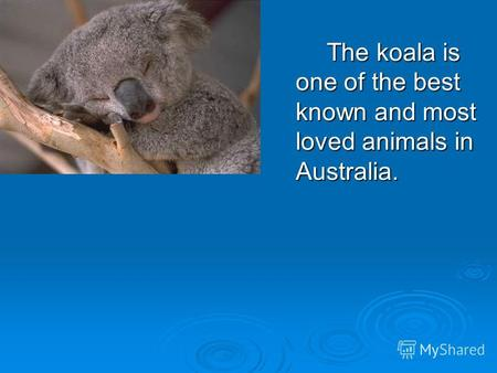 The koala is one of the best known and most loved animals in Australia.