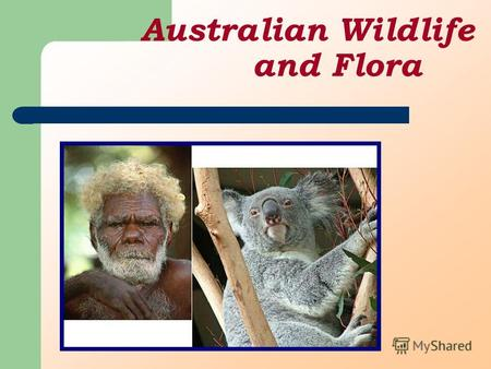 Australian Wildlife and Flora. Flora Australia is blessed with a fascinating mix of native flora. Its distinctive plants include the gum tree or eucalypt,