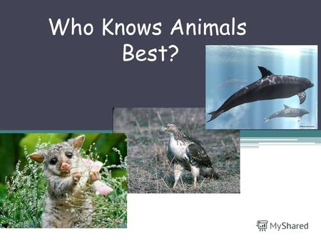 Who Knows Animals Best?. 1.Where does the dolphin live? a)In the mountains b)In the fields c)In the seas.