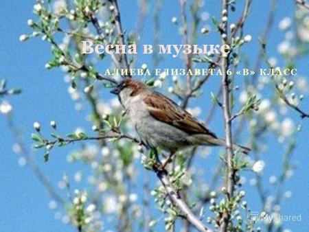 Презентацию с музыкой на тему весна
