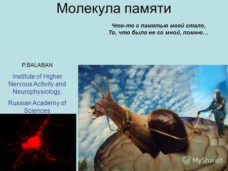 Молекула памяти P.BALABAN Institute of Higher Nervous Activity and Neurophysiology, Russian Academy of Sciences Что-то с памятью моей стало, То, что было.