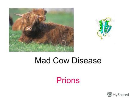 Mad Cow Disease Prions. Конформационные (пространственные) матрицы, или феномен белковой наследственности.