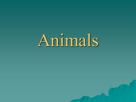 Animals Animals Place savannaforestjunglewater Africa Europe Asia Australia Americas Antarctica.