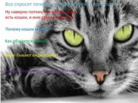 Мурлыканье кота скачать бесплатно