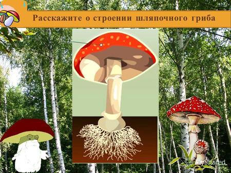 грибы паразиты человека это