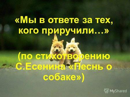 Сочинение стихотворение песнь о собаке есенин назвал