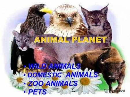WILD ANIMALS WILD ANIMALS DOMESTIC ANIMALS DOMESTIC ANIMALS ZOO ANIMALS ZOO ANIMALS PETS PETS.