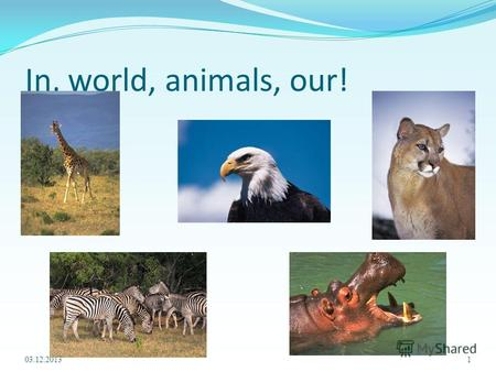 In, world, animals, our! 03.12.20131. Animals in our world!!! 2.