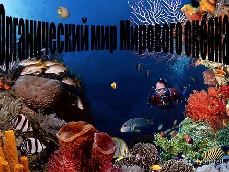Презентацию на тему био ресурсы мирового океана
