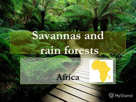 Savannas and rain forests Africa Savanna Rain forest.