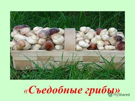 Класс тему презентацию 3 ядовитые грибы на
