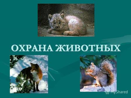 Презентация на тему размножение и развитие животных