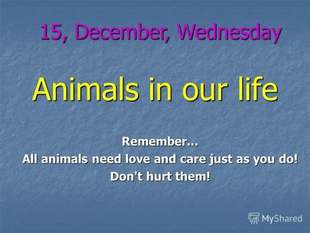 Animals in our life 15, December, Wednesday Remember... All animals need love and care just as you do! Don't hurt them!