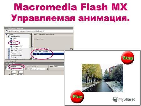 Презентацию по теме macromedia flash