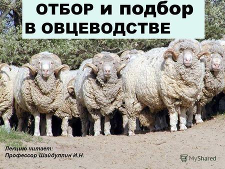Презентация на тему овцеводство 10 класс