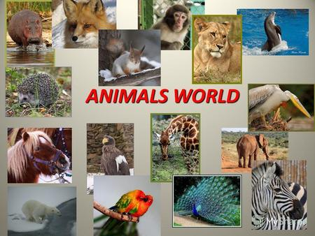 ANIMALS WORLD. Its very long. It doesnt have any legs. It eats small animals. It can be very dangerous. It has a very long neck and four long legs. It.