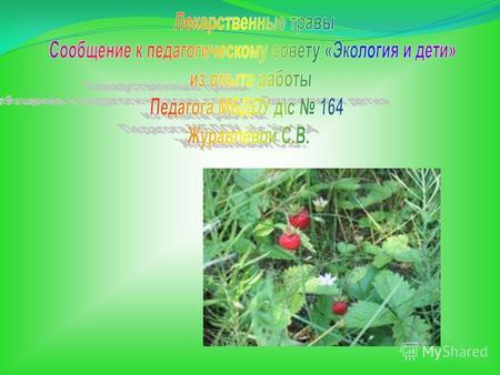 как знакомить детей с лекарственными растениями