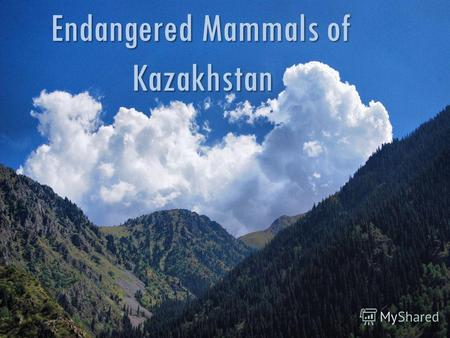 Endangered Mammals of Kazakhstan.