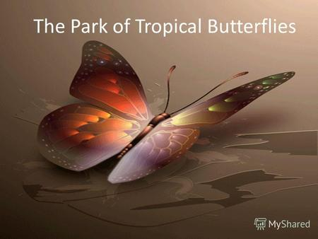 The Park of Tropical Butterflies. A new park of tropical butterflies has recently opened in Novosibirsk. Here they are born and live all their lives,