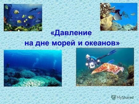 Животный мир океанских глубин доклад по физике 5240