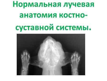 Опухоли костно-суставной системы патологическая анатомия коленный сустав питание