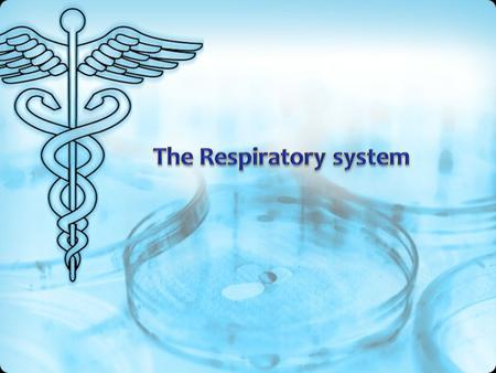The human respiratory system - a set of bodies providing external respiration (gas exchange between the inhaled ambient air and blood).